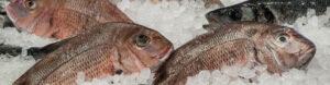Saltwater Seafood Fresh Fish Header