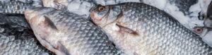 Saltwater Seafood Frozen Fish Header