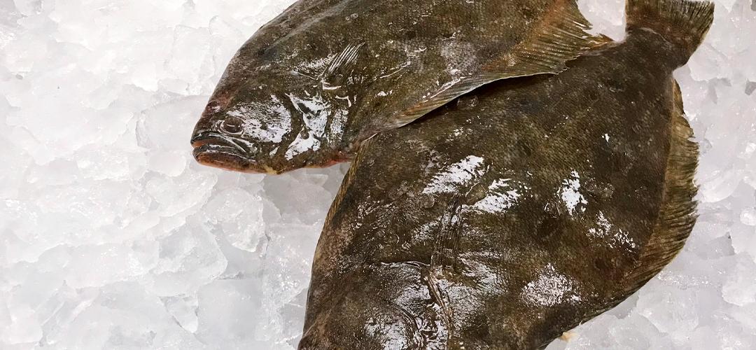 Saltwater Seafood Market Fish