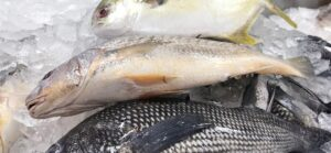 Saltwater Seafood | Seafood Market Fish